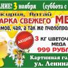 Выставка меда